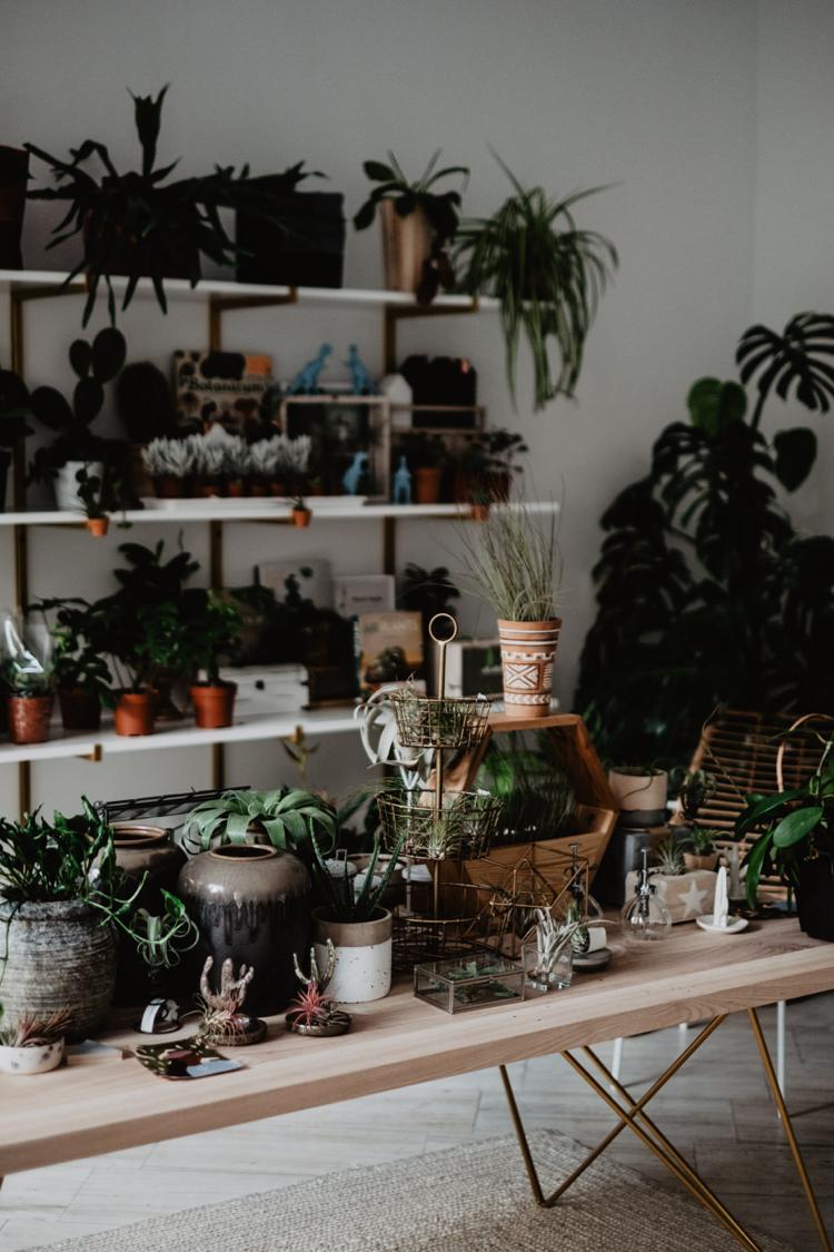 Kamila Burchardt,sklep z roślinami Plantarium, biżuteriaLenoa