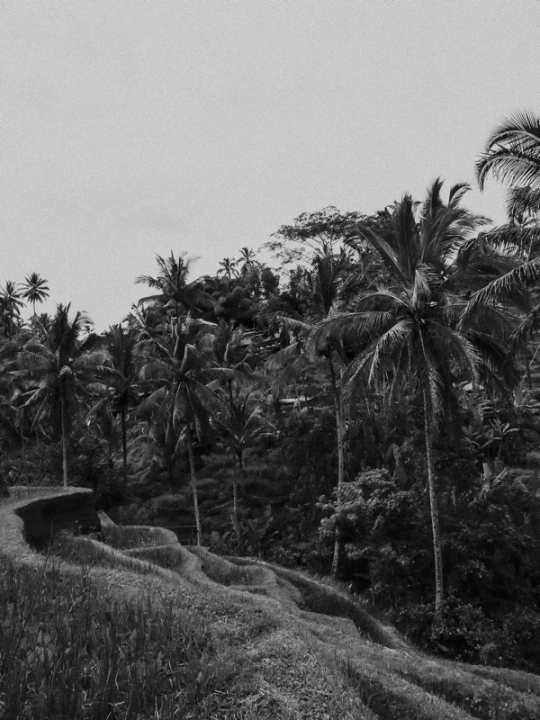 pole ryżowe Bali